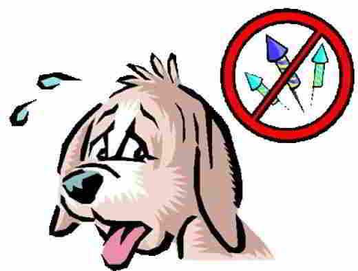Собака-и-фейерверки
